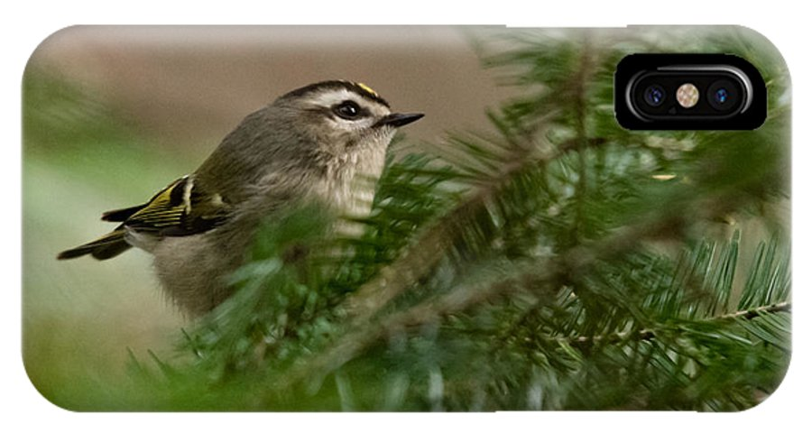 IPhone X Case featuring the photograph Yellow-crowned Kinglet by Cheryl Baxter