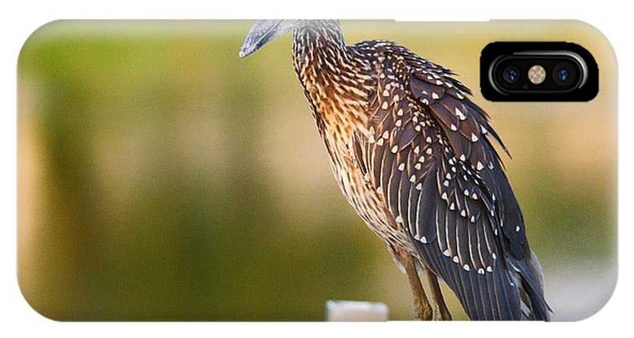 Bird IPhone X Case featuring the photograph Yellow-crowned Night-heron Portrait Series 3 by Roy Williams