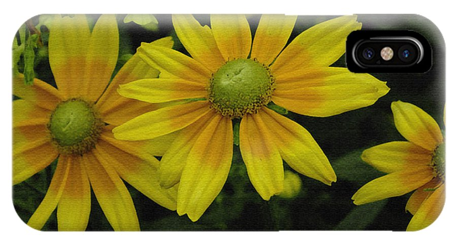 Yellow Daisies IPhone X Case featuring the photograph Yellow Daisies by James C Thomas