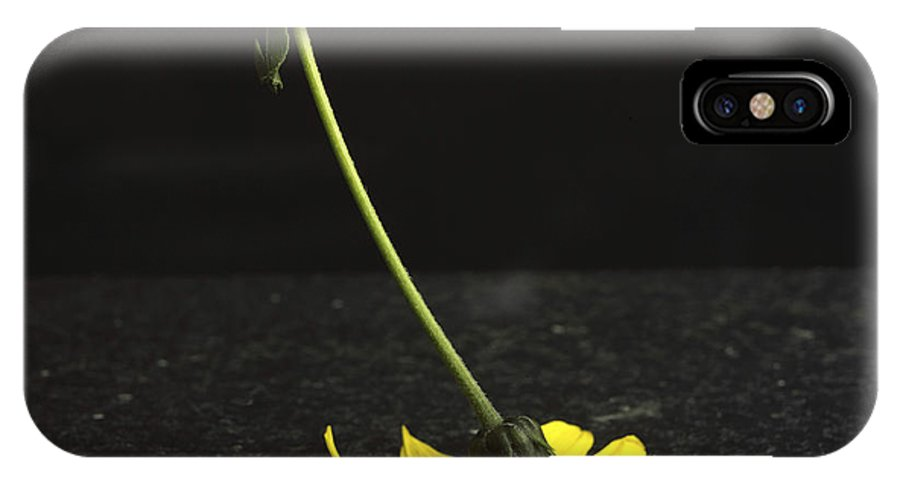 Studio Shot IPhone X Case featuring the photograph Yellow Daisy by Bernard Jaubert