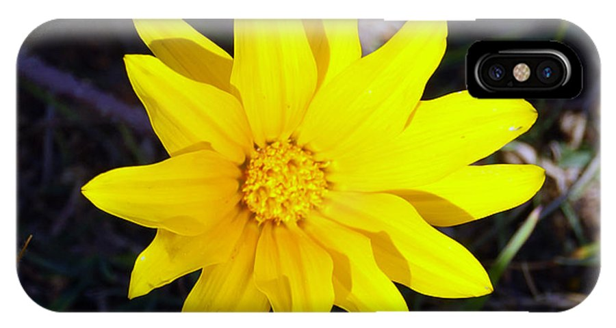 Yellow IPhone X / XS Case featuring the photograph Yellow Daisy by Cassandra Buckley