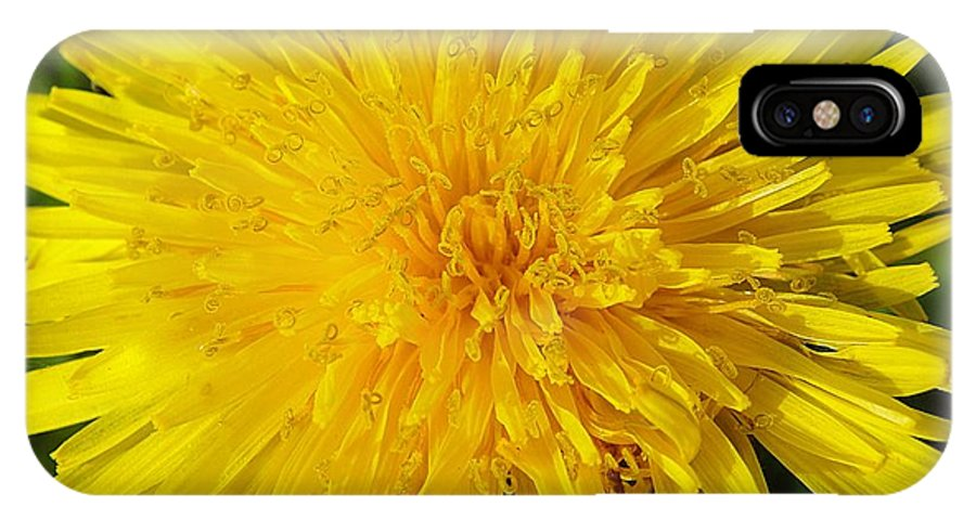 Dandelion IPhone X Case featuring the photograph Yellow Dandelion With A Little Heart by Karin Ravasio