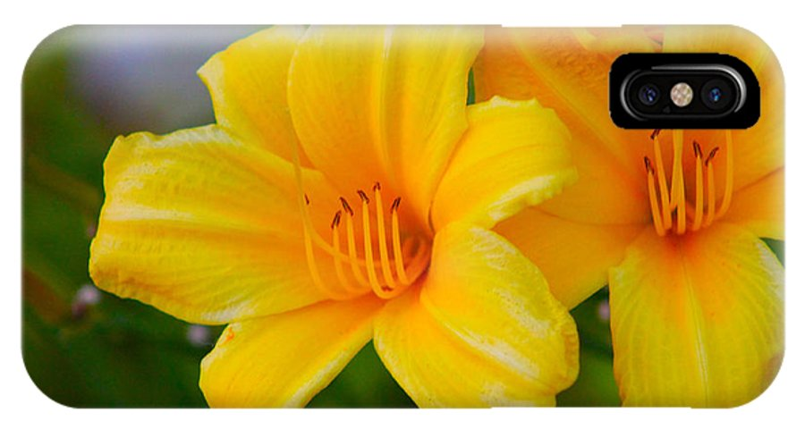 Yellow IPhone X Case featuring the photograph Yellow Flower by Ryan Rodriguez