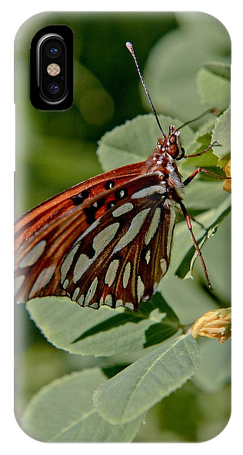 Butterfly IPhone X Case featuring the photograph Yellow Flower With Gulf Fritillary Butterfly by Her Arts Desire