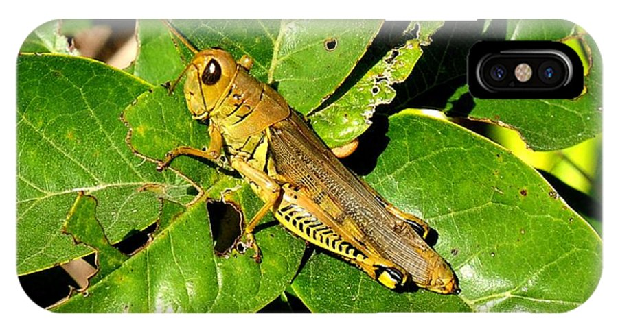 Landscape IPhone X Case featuring the photograph Yellow-green Grasshopper by Marilyn Burton