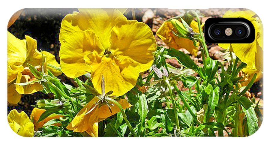 Yellow Flower IPhone X Case featuring the photograph Yellow Flower In The Sun by Steve Purifoy