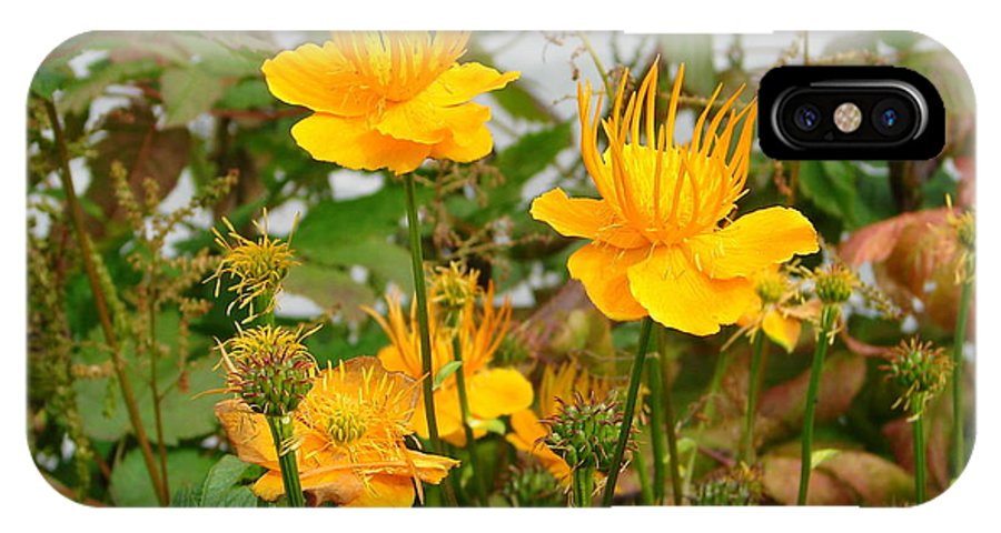 Flower IPhone X Case featuring the photograph Yellow Is Golden by Lew Davis