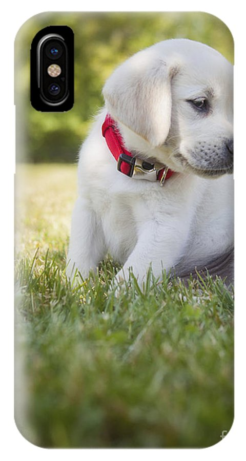 Yellow Lab IPhone X Case featuring the photograph Yellow Lab Puppy In The Grass by Diane Diederich