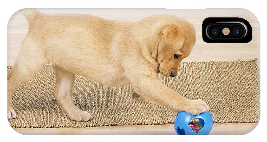 Labrador Retriever IPhone X / XS Case featuring the photograph Yellow Labrador Puppy by John Daniels