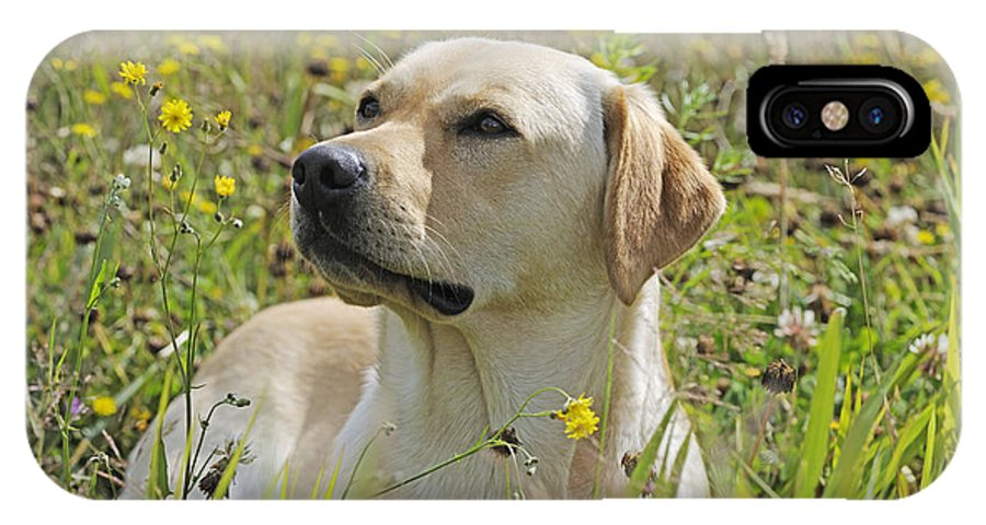Labrador Retriever IPhone X / XS Case featuring the photograph Yellow Labrador Retriever by John Daniels