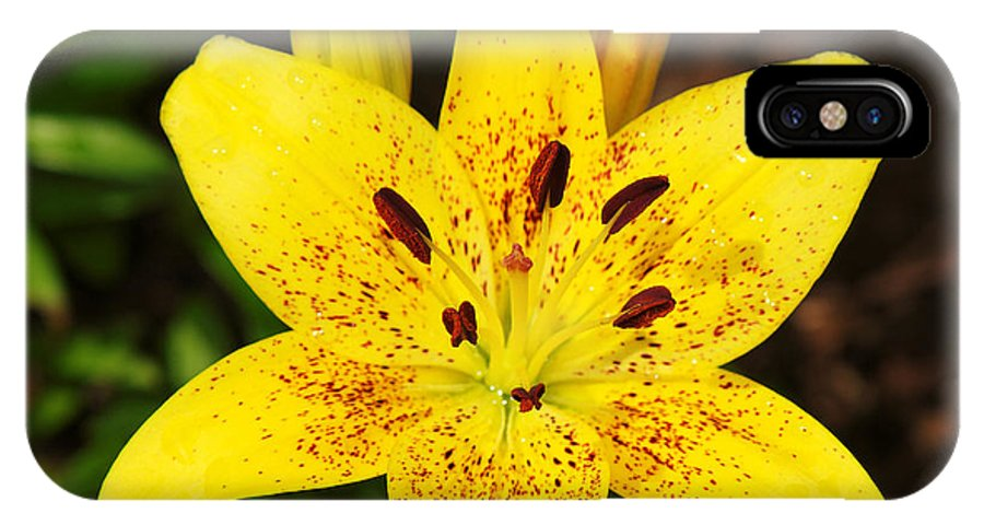 Bloom IPhone X Case featuring the photograph Yellow Lily by Charles Feagans