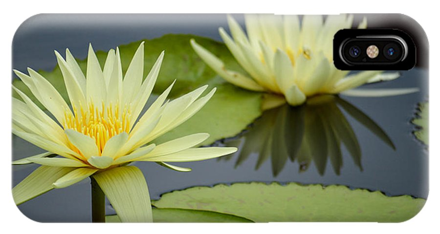 Flower IPhone X / XS Case featuring the photograph Yellow Lotus by Caroline Blau