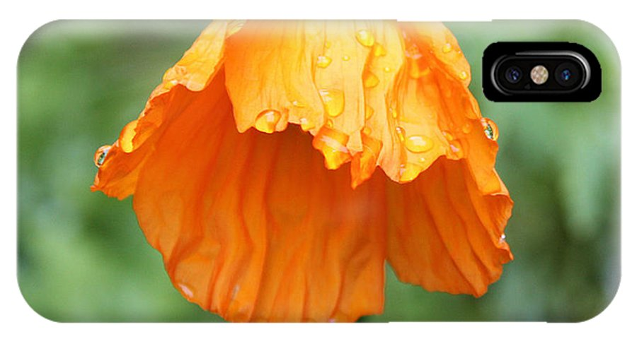 Flower IPhone X Case featuring the photograph Yellow Poppy - Morning Dew by Steven Baier