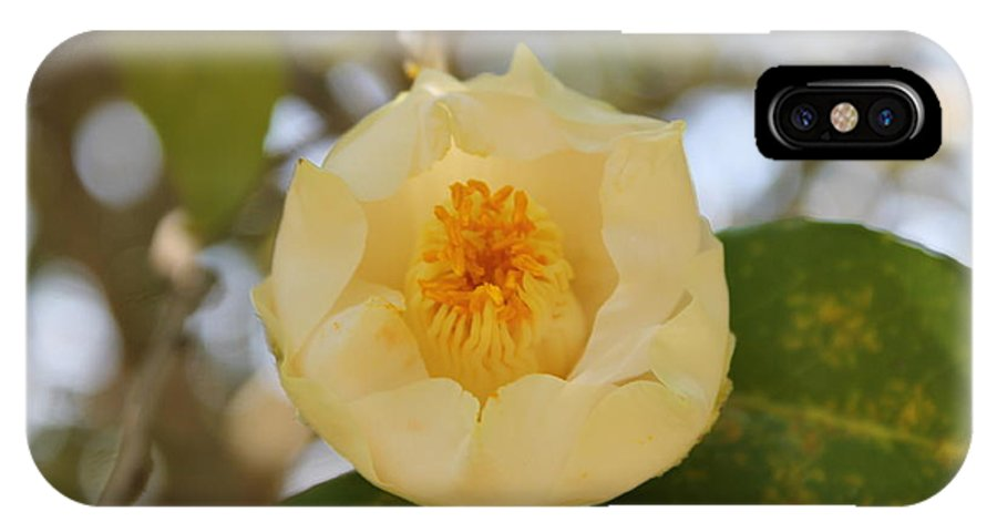 Yellow IPhone X Case featuring the photograph Yellow Rose by Mary Koval