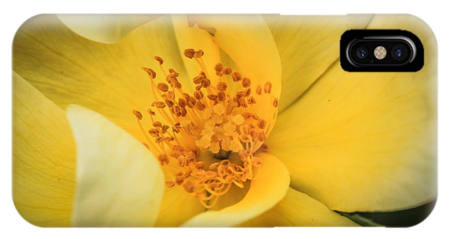 2013 IPhone X Case featuring the photograph Yellow Rose by Tracy Milstead