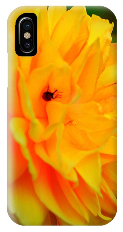 Yellow Rose IPhone X Case featuring the photograph Yellow Rose With Lady Bug by Jacqueline Russell