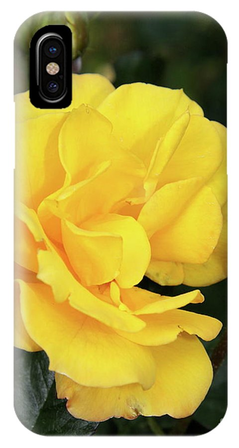Rose IPhone X Case featuring the photograph Yellow Roses by Christiane Schulze Art And Photography