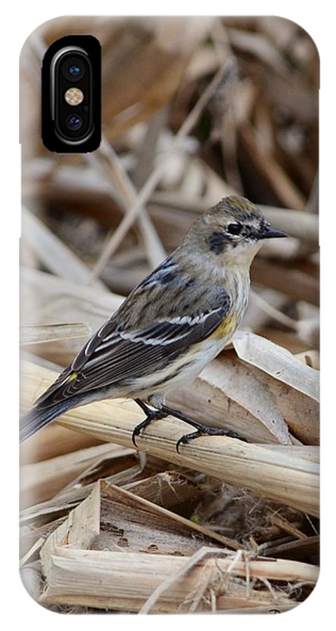 Yellow-rumped Warbler IPhone X Case featuring the photograph Yellow-rumped Warbler by Debra Martz