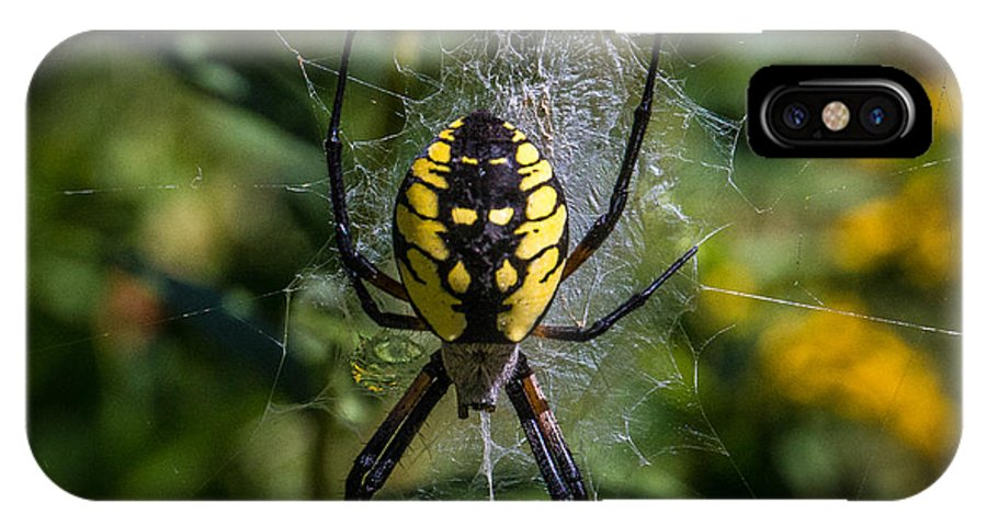 Yellow Spider IPhone X Case featuring the photograph Yellow Spider by Barbara J
