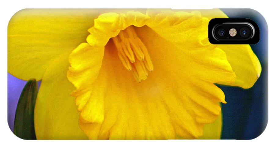 Daffodil IPhone X Case featuring the photograph Yellow Spring Daffodil by Kay Novy