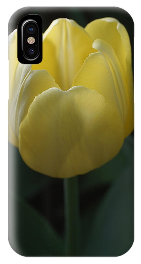 Beautiful Flower IPhone X Case featuring the photograph Yellow Tulip by David Schleiss
