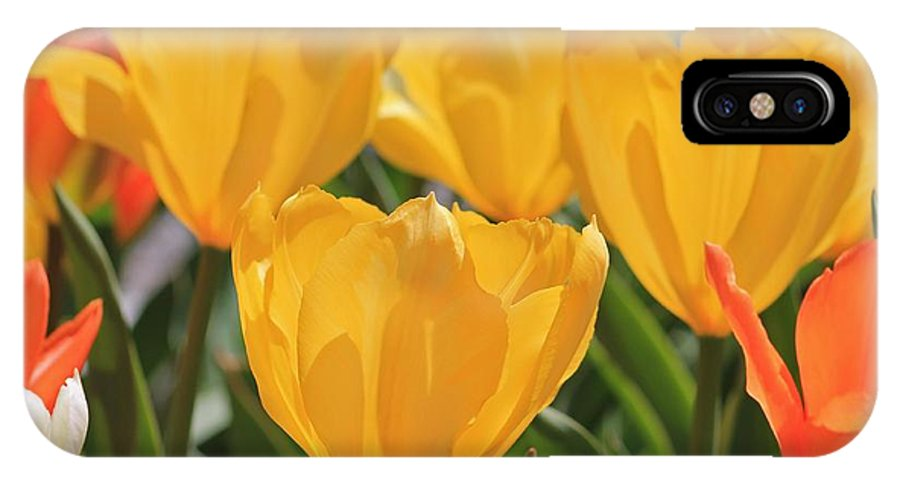 Flowers IPhone X Case featuring the photograph Yellow Tulip by Michael Saunders