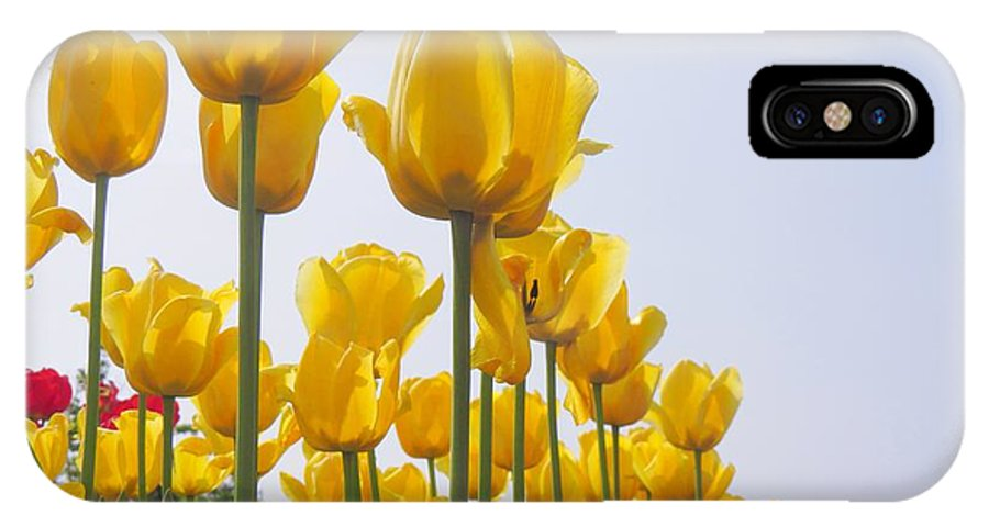Tulips IPhone X Case featuring the photograph Yellow Tulips by Scott Cameron
