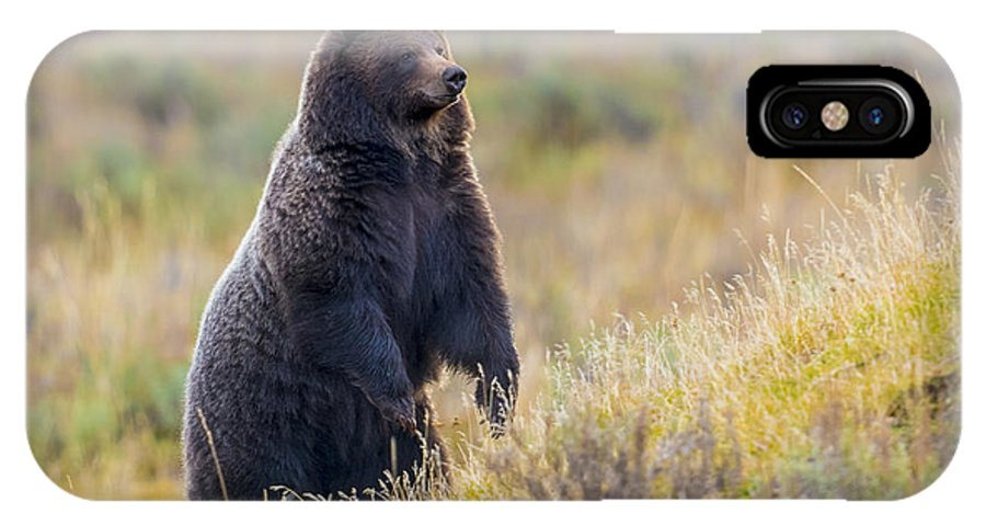 Grizzly IPhone X Case featuring the photograph Yellowstone Grizzly Standing - 1 by Greig Huggins
