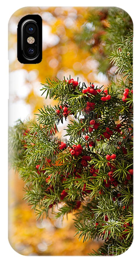 Acerose IPhone X Case featuring the photograph Taxus Baccata Or Yew Red Fruits On Twig by Arletta Cwalina