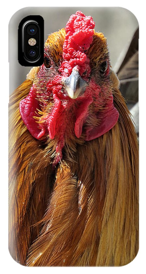 Chicken IPhone X Case featuring the photograph Yo Human by Art Dingo