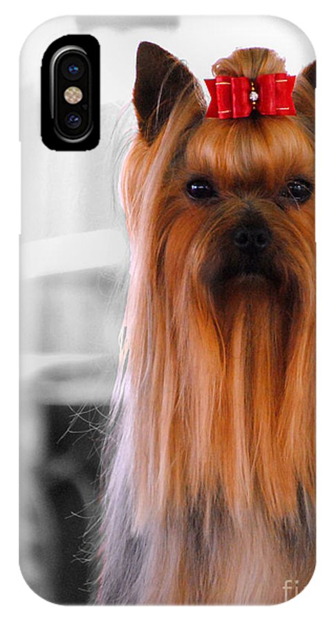 Yorkshire IPhone X Case featuring the photograph Yorkshire Terrier by Jai Johnson