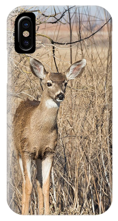 Black IPhone X Case featuring the photograph Young Black-tailed Deer by Kathleen Bishop