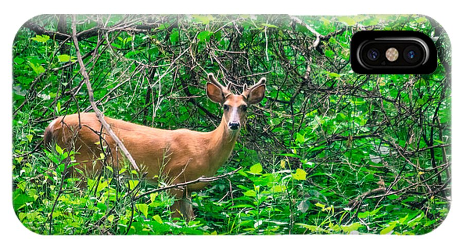 Fort Snelling IPhone X Case featuring the photograph Young Buck by Melinda Weir