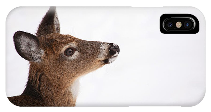 Deer IPhone X Case featuring the photograph Young Deer In Winter by Karol Livote