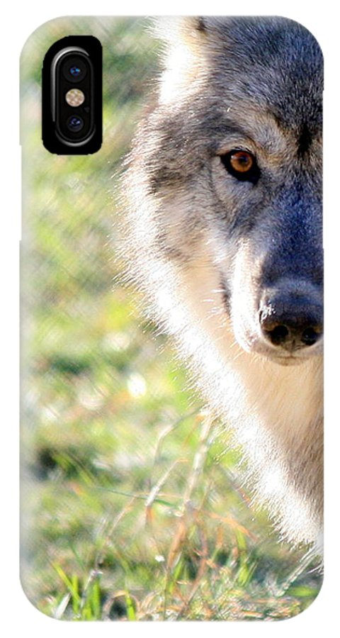 Wolves IPhone X Case featuring the photograph Young Gray Wolf In Light by Neal Eslinger