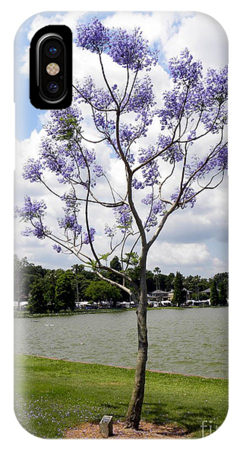 Tree IPhone X Case featuring the photograph Young Jacaranda Tree by Terri Mills
