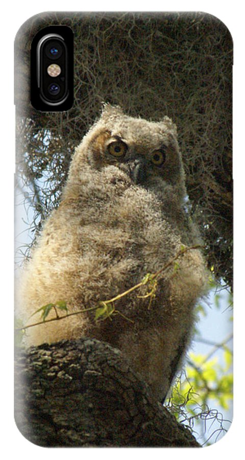 Owl IPhone X Case featuring the photograph Young Owl. by Evelyn Hill