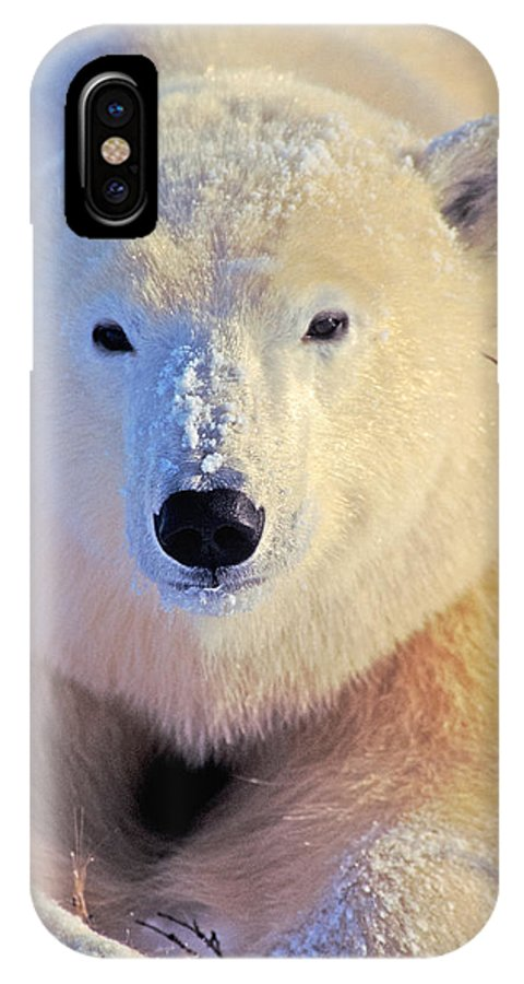 Arctic IPhone X / XS Case featuring the photograph Young Polar Bear by Randy Green