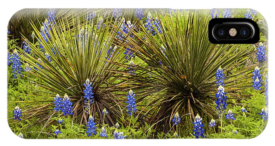 Praire Mountain Texas Wildflower Wildflowers Flowers Flower Plant Plants Yucca Yuccas Bluebonnet Bluebonnets Lupin Lupins Landscape Landscapes Spring IPhone X Case featuring the photograph Yucca With Bonnets by Bob Phillips