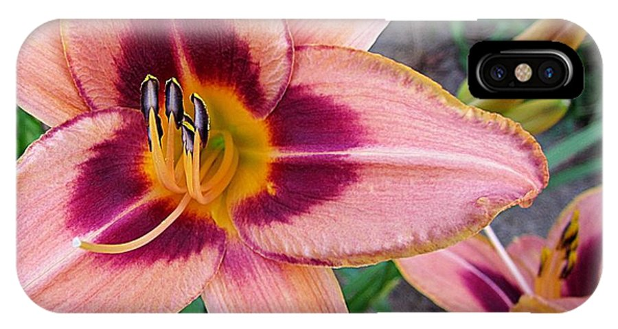 Daylily IPhone X Case featuring the photograph Zagora Daylilies by MTBobbins Photography