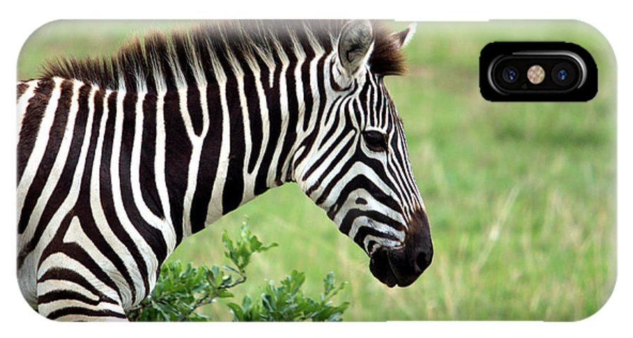 Zebra IPhone X Case featuring the photograph Zebra by Aidan Moran