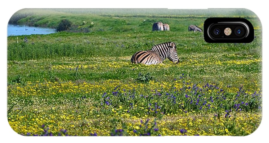 Landscape; Flowers; Zebras; Meadow; Wild; Animal; Nature; Farmland; South Africa; Swartland; Green; Yellow; Background; IPhone X Case featuring the photograph Zebra Heaven.. by Werner Lehmann