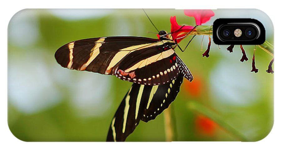 Butterfly IPhone X Case featuring the photograph Zebra Longwing by TN Fairey