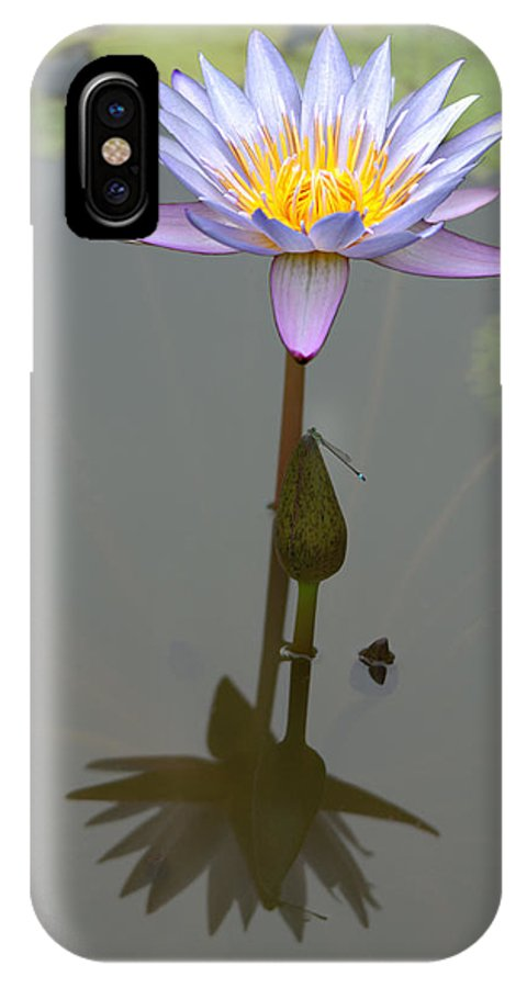 Roy Williams IPhone X Case featuring the photograph Zilker Botanical Park - Water Lily by Roy Williams