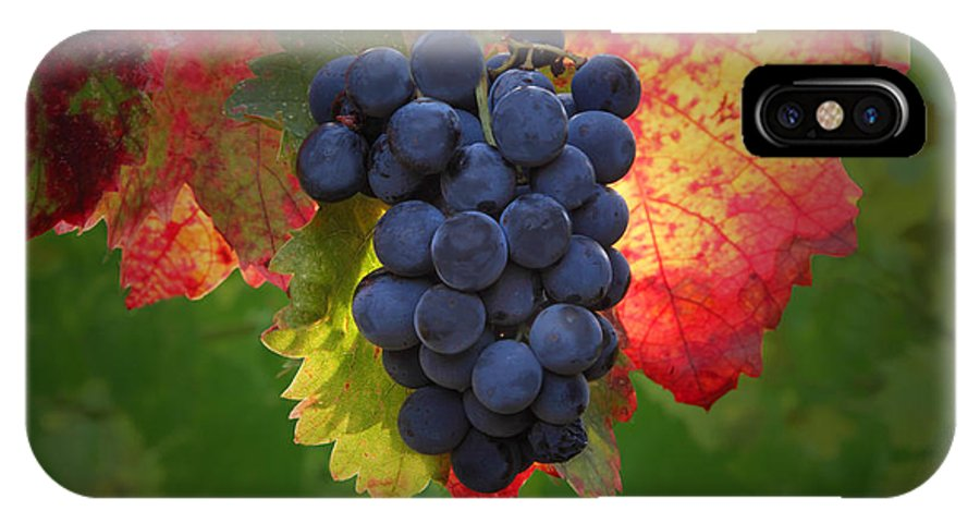 Wine IPhone X Case featuring the photograph Zinfandel Grapes by Susan Rovira
