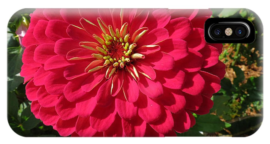Zinna IPhone X Case featuring the photograph Zinna by Bill Marder