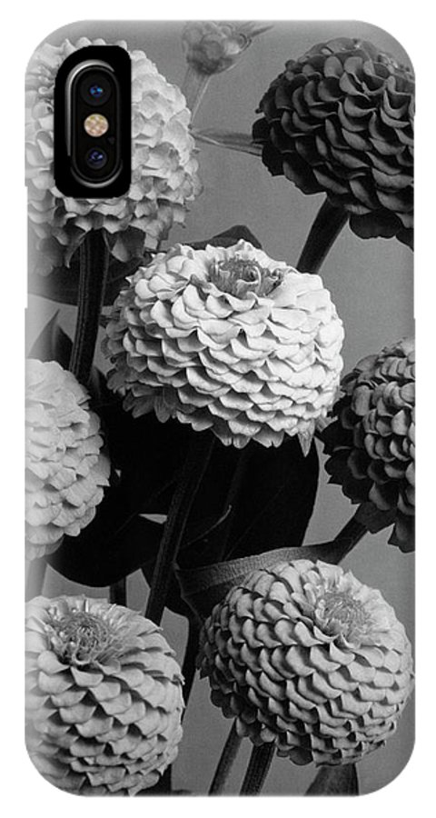 Flowers IPhone X Case featuring the photograph Zinnia Lilliput Flowers by J. Horace McFarland