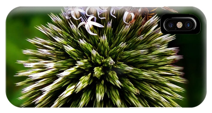 Allium IPhone X / XS Case featuring the photograph Zoom by Susie Peek