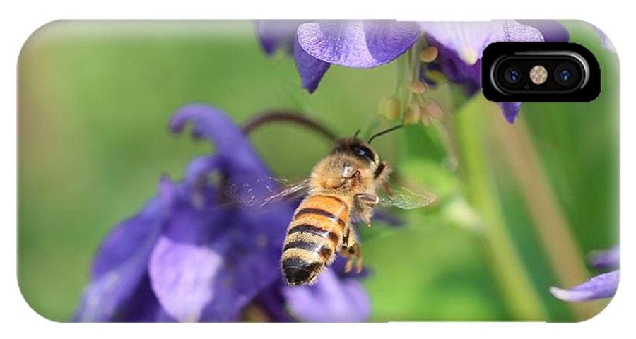 Honeybee IPhone X Case featuring the photograph Zooming In On Colombine by Lucinda VanVleck