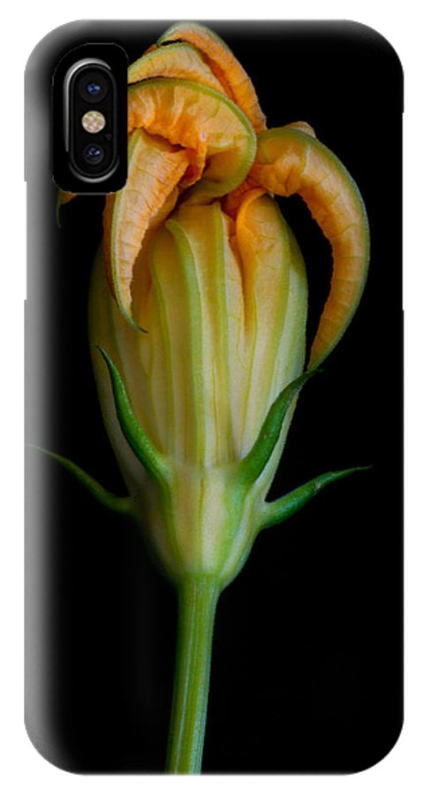Flower IPhone X Case featuring the photograph Zucchini Jester by Robert Woodward